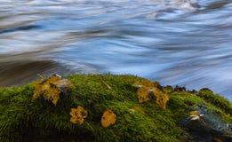 Jesień liście zbliżają rzekę Obraz Royalty Free