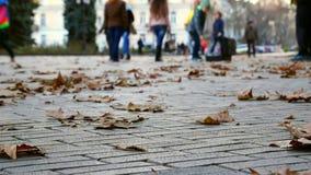 Jesień Ludzie Chodzić zdjęcie wideo
