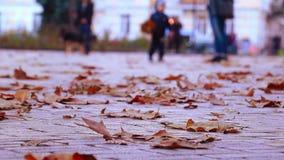 Jesień Ludzie Chodzić zbiory