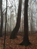 Jesień mgła Obraz Stock