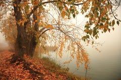 Jesień, mgła, ranek Zdjęcia Stock