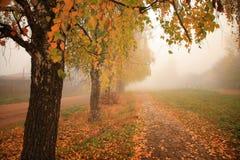 Jesień, mgła, ranek Obrazy Royalty Free