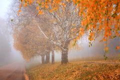 Jesień, mgła, ranek Obraz Royalty Free