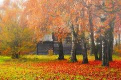 Jesień mgłowy krajobraz - drewniany dom wśród yellowed drzew obrazy royalty free