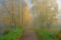 Jesień mgłowy ranek w parku Obrazy Royalty Free