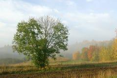 jesień mgły Zdjęcia Royalty Free