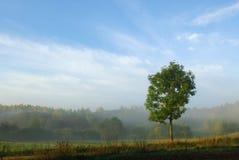 jesień mgły Fotografia Royalty Free