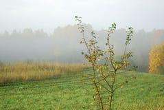 jesień mgły Obraz Royalty Free