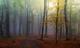 jesień mgły lasowa zieleń Obraz Stock