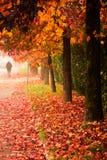 jesień miasto mieści liść drzew kolor żółty Zdjęcia Stock
