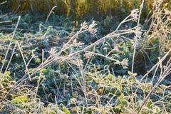 Jesień mróz i słońce, mróz na trawie Zdjęcia Stock