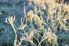 Jesień mróz i słońce, mróz na trawie Obraz Stock