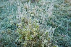 Jesień mróz i słońce, mróz na trawie Obraz Royalty Free