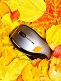 jesień mysz zdjęcie royalty free