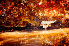 Jesień na rzece Fotografia Stock