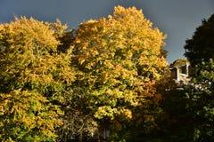 Jesień na słonecznym dniu, lasowy ochraniacz, susząca roślina z czerwoną jagodą Fotografia Stock