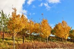 Jesień na słonecznym dniu, park, żółty drzewo Zdjęcie Royalty Free