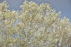 Jesień na słonecznym dniu, park, brzozy drzewo, rozgałęzia się Zdjęcia Royalty Free