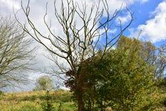 Jesień na słonecznym dniu, park, drzewo, rozgałęzia się Fotografia Royalty Free