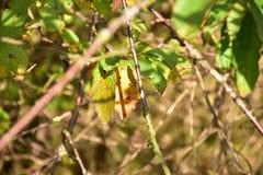 Jesień na słonecznym dniu, park, drzewo, rozgałęzia się Zdjęcia Stock