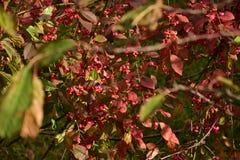 Jesień na słonecznym dniu, park, drzewo, rozgałęzia się Obrazy Royalty Free