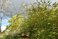 Jesień na słonecznym dniu, park, drzewo, rozgałęzia się Zdjęcia Royalty Free
