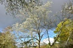 Jesień na słonecznym dniu, park, drzewo, rozgałęzia się Fotografia Stock