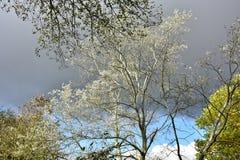 Jesień na słonecznym dniu, park, drzewo, rozgałęzia się Obraz Royalty Free
