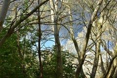 Jesień na słonecznym dniu, park, drzewo, rozgałęzia się Obraz Stock