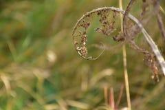 Jesień na słonecznym dniu, wysuszonym paprociowym liściu i zamazanej łące, Obraz Royalty Free