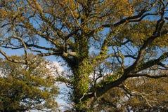 Jesień na Woodbury błoniu, Devon Zdjęcie Royalty Free