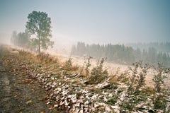 jesień najpierw snow Opad śniegu w parku Zdjęcie Royalty Free