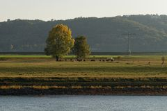 Jesień nastrój na Elbe blisko Drezdeńskiego fotografia royalty free