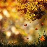 Jesień, naturalni abstraktów tła Fotografia Stock