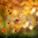 Jesień, naturalny abstrakta tło zdjęcie stock