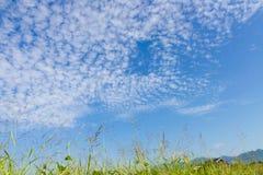 Jesień niebo i trawa Obrazy Royalty Free