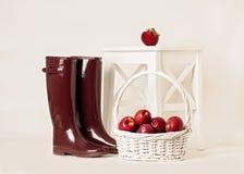 Jesień Żniwo jabłka Gumowi buty Burgundy na bielu Obrazy Royalty Free