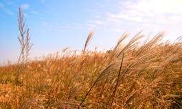 Jesień obłoczny wierzchołek Zdjęcie Stock