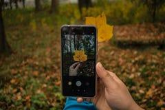 Jesień obrazek z jeden liściem brać z telefonem komórkowym obraz royalty free