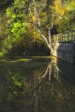 Jesień odbija drzewa obraz royalty free