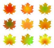 jesień odizolowywająca opuszczać klonu Zdjęcie Royalty Free