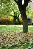jesień ogród Zdjęcia Royalty Free