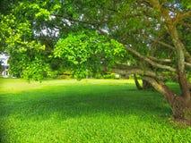jesień ogrodowy scenerii drzewo fotografia stock