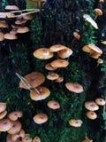 Jesień ono rozrasta się na drzewie w lesie Zdjęcie Royalty Free