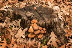 Jesień ono rozrasta się na drzewnej barkentynie otaczającej suchymi liśćmi zdjęcia stock