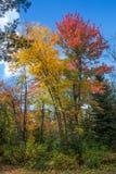 jesień Ontario zdjęcie stock