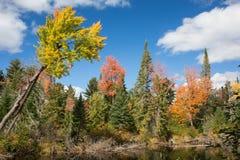 jesień Ontario zdjęcia royalty free