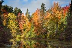 jesień Ontario obrazy stock