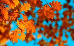jesień ostrości liść spłycają bardzo zdjęcie royalty free