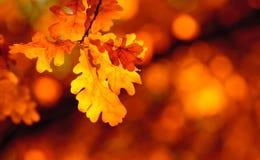 jesień ostrości liść spłycają bardzo fotografia royalty free